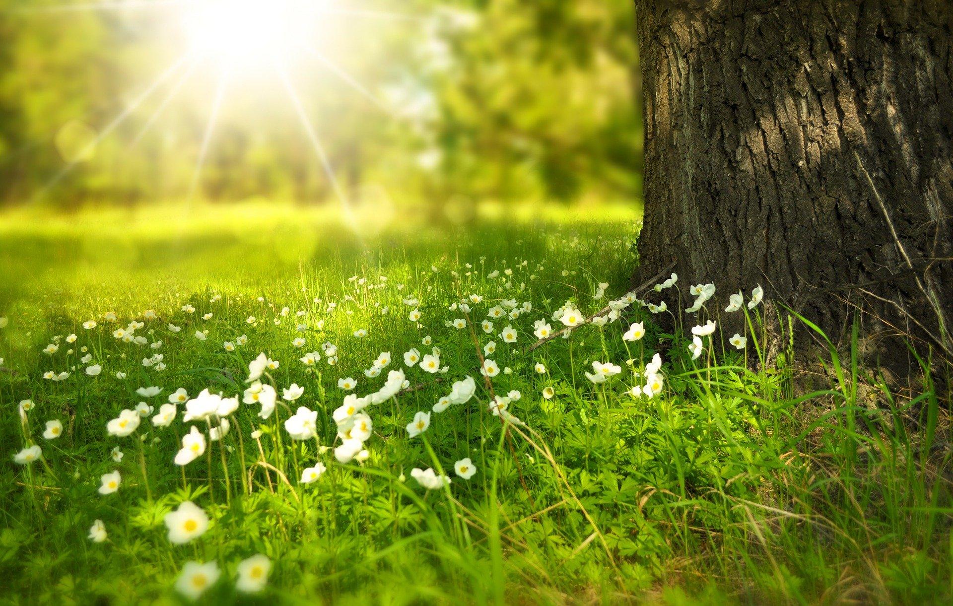 трева, слънце, гора