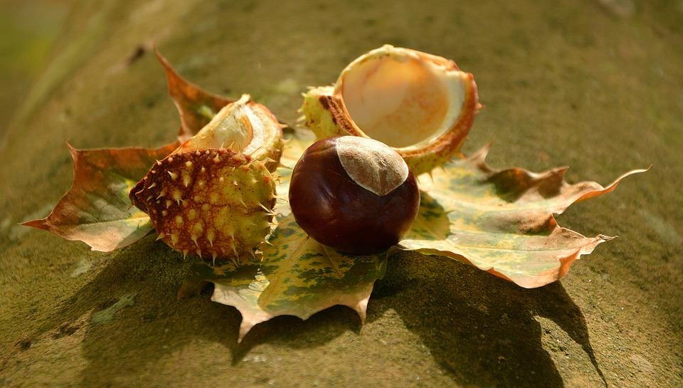 есен октомври кестен