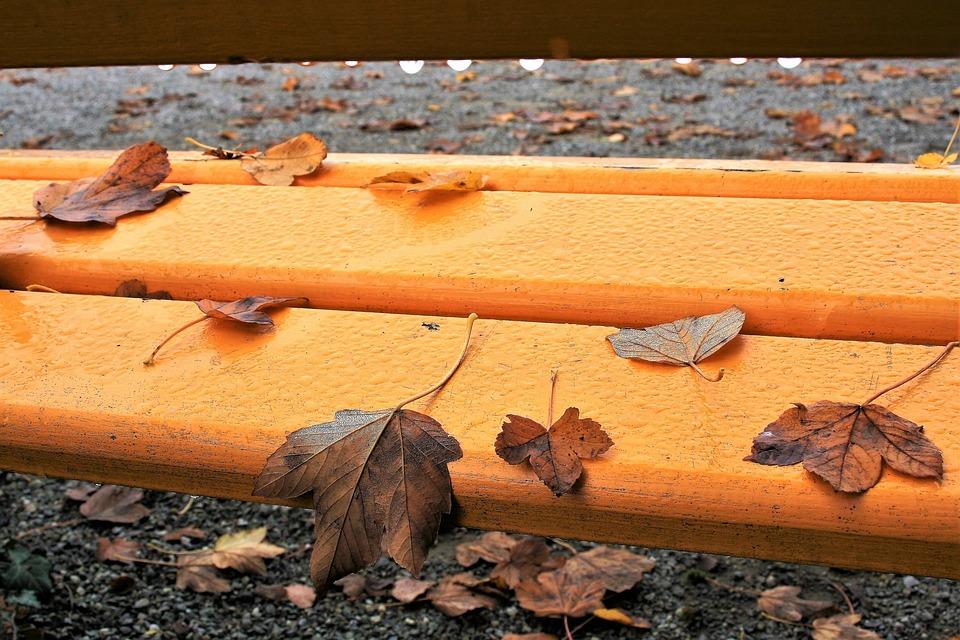 есен дъжд листа пейка